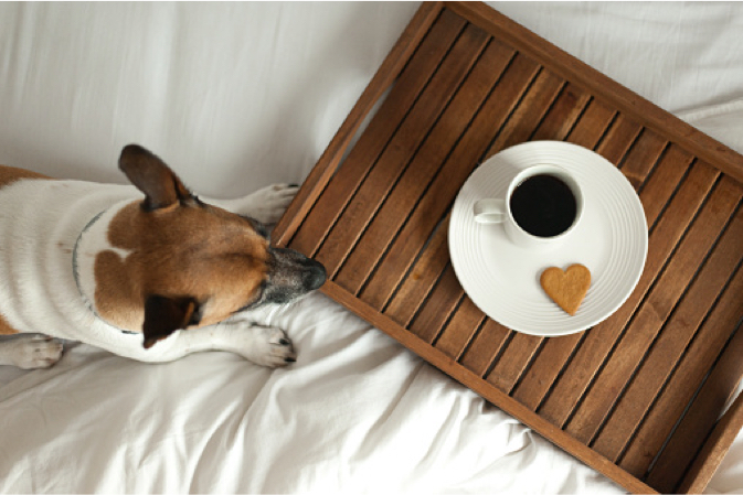 Pet friendly long term lodging hotel rooms